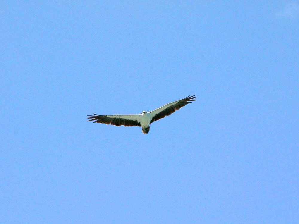 Eagles remind us to not allow the illusion of limitation to ground us in our flight.