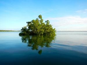mangrove islands...